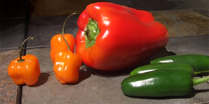 Peppers reference photo